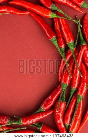 red hot chili peppers, popular spices concept - pods of red hot chili pepper in beautiful half circle composition on red background, top view, flat lay, free space for text