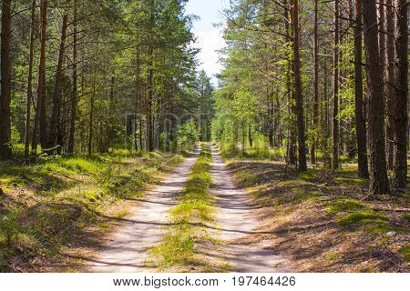 Road in the forest. A sunny day in a green forest. Shadow of trees on the road. Summer Beautiful forest