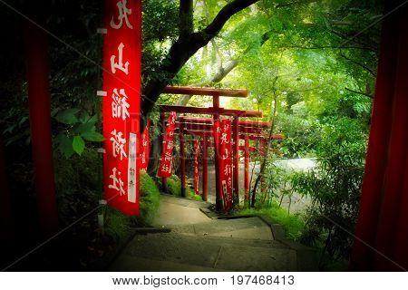 Looking through a series of tori gates in Japan.