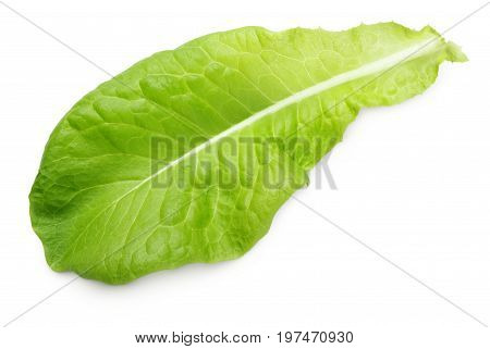 lettuce green leaf salad isolated on white background with clipping path