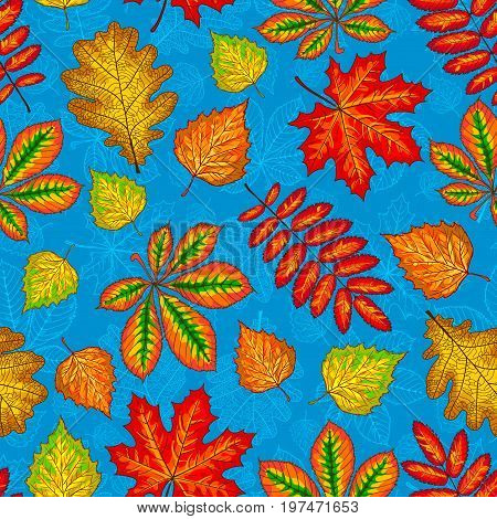 Seamless pattern from autumn leaves. Botanical background. Maple, birch, chestnut, oaken and ashberry leaves