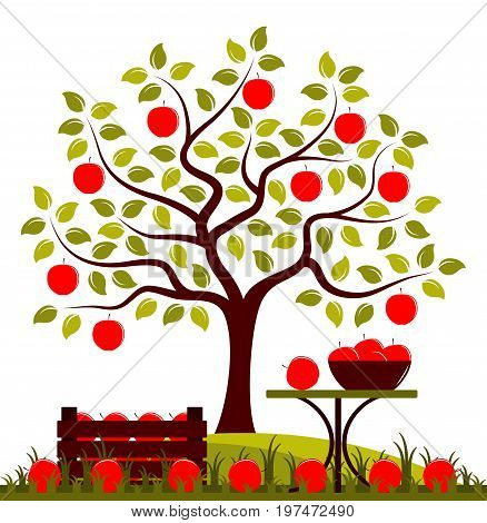 vector apple tree, wooden crate of apples and table with apples in bowl isolated on white background