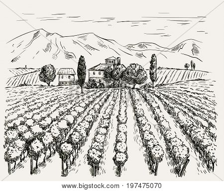 Vineyard and winery. vector sketch drawn by hand on a grey background