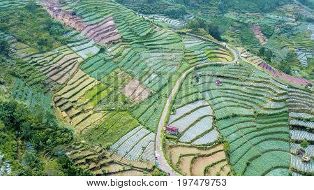 Beautiful aerial view of Dieng Plateau farmland with road and terraced system. Shot in Dieng Plateau Central Java Indonesia