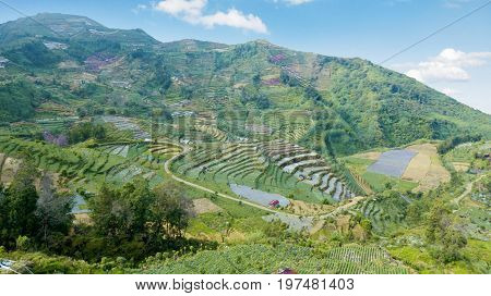 Beautiful aerial landscape of green farmland with terraced system in Dieng plateau Central Java Indonesia