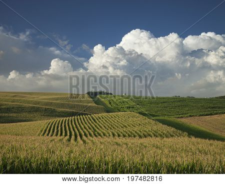 Corn and soybean fields in Minnesota below dramatic clouds in late afternoon sunlight