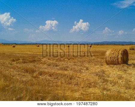 Bale of hay on a mown field with a clear sky
