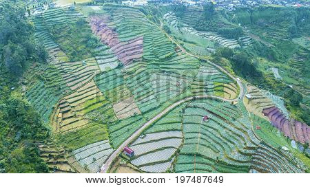 Beautiful top view of Dieng Plateau farmland with terraced system and road. Shot in Dieng Plateau Central Java Indonesia