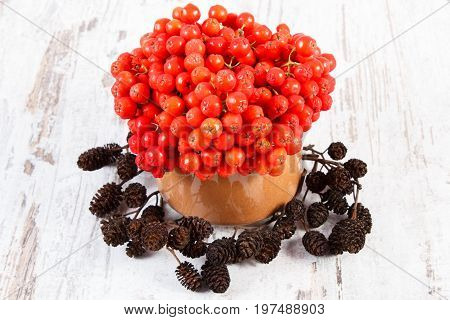 Bunch of red autumn rowan in glass dish and alder cone on old rustic wooden background