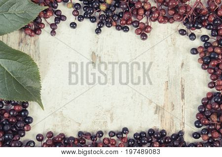 Vintage Photo, Frame Of Autumn Elderberry With Leaf, Copy Space For Text On Old Rustic Board
