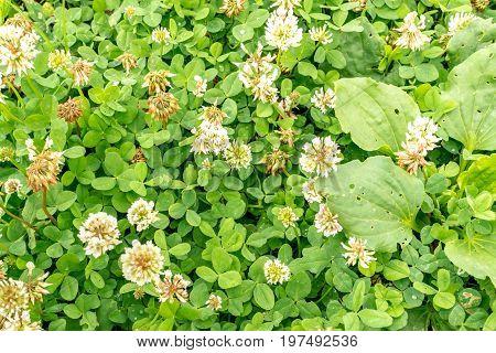 Green Lush Foliage