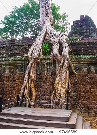 The classical picture of Ta Prohm Temple, Angkor, Cambodia
