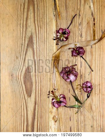 floral composition with dried wilted lilies flowers on old dark wooden table background poster