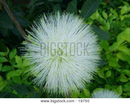 A Beautiful White Flower