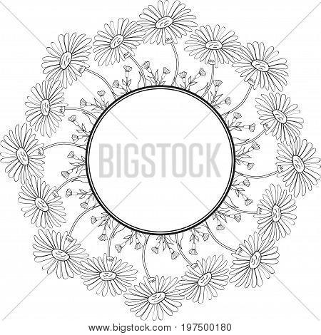 Arnica. Vintage medicinal herb sketch. Botanical plant illustration, isolated on white background, round frame, decorative border.