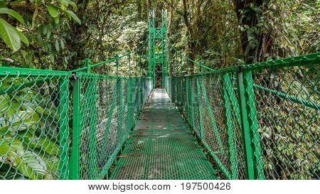 Wide angle view of green hanging bridge in the Rainforest of Monteverde