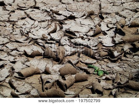 Dry land, dry earth, dry ground. Earth pattern. Little plant and dry ground. Dry soil background. Earth, earth texture, earth background. Natural background. Gray background. Grey background. Soil, soil background, soil texture. Natural texture.