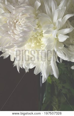 White Chrysanthemum flower boquet in a glass vase. Positioned in a dark environment with only the petals illuminated. Close up and heavily cropped framing used.