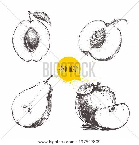 Hand drawn sketch style fruits set. Apricot with stone peach half with leaf half pear apples composition. Bio food vector illustration collection isolated on white background.