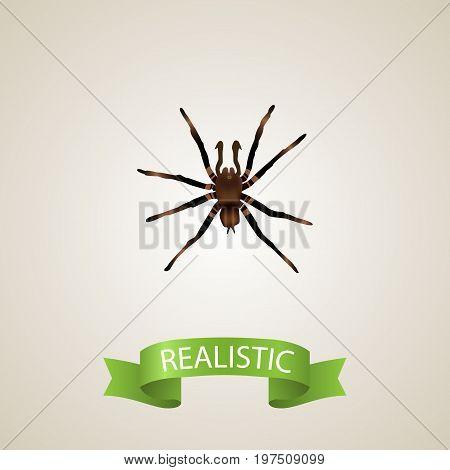 Realistic Tarantula Element. Vector Illustration Of Realistic Arachnid Isolated On Clean Background