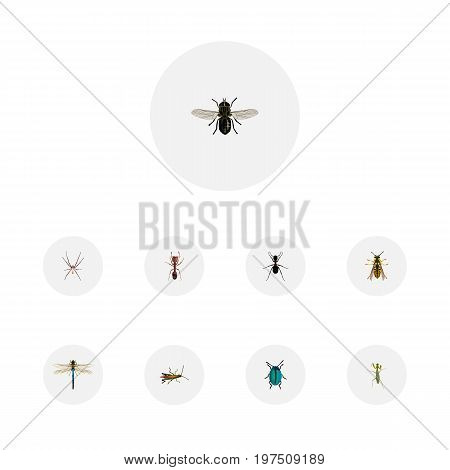 Realistic Locust, Damselfly, Spider And Other Vector Elements