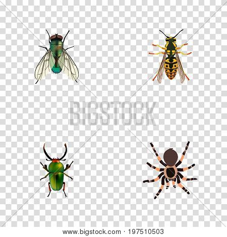 Realistic Insect, Housefly, Tarantula And Other Vector Elements