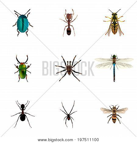 Realistic Arachnid, Bee, Insect And Other Vector Elements