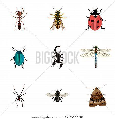 Realistic Bee, Midge, Emmet And Other Vector Elements
