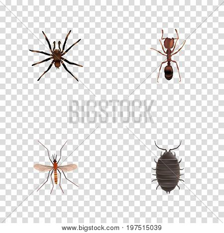 Realistic Arachnid, Dor, Emmet And Other Vector Elements