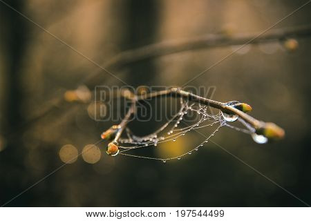 Spider web on kidneys with colorful background at morning