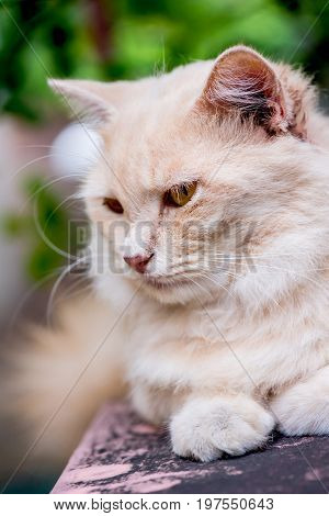 Cat lovely animal and pet in the garden