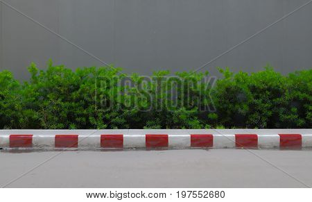 A little low shrub fence with gray color wall background and footpath front.