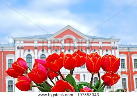 Jelgava, Latvia - May 8th, 2011: Latvia University of Agriculture. Red tulips in front of the palace for annual spring celebration event where people sell seedlings.