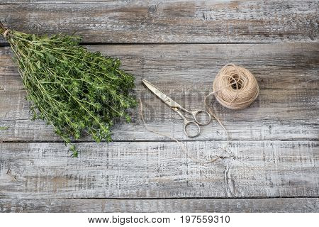 Aromatic culinary herbs Savory. Fresh and dry savory herb with vintage scissors on rustic wooden background