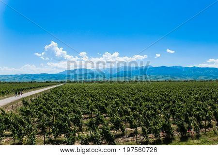 winery landscape with walking people and blue sky with mountains on background near Almaty, Kazakhstan in summertime