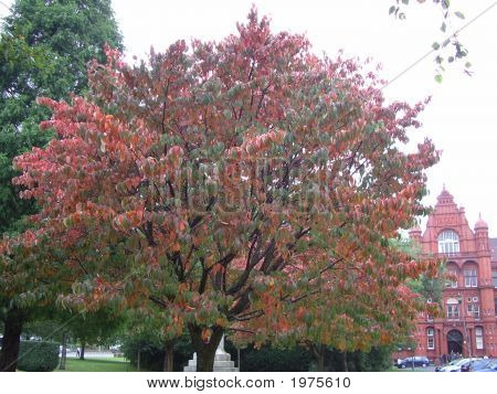Leaves In Autumn/Fall