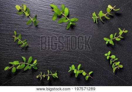Flat Lay Of Twigs Fresh Green Lemon Melissa Officinalis On Black Slate Stone Background
