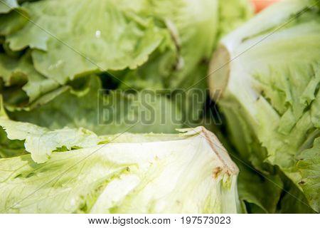 Leaf Vegetable - Organic Lettuce - Vegetarian And Vegan Food