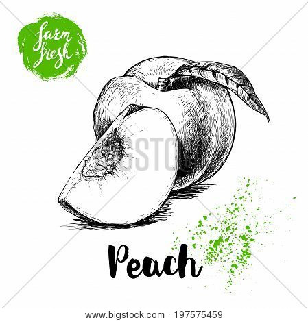 Hand drawn sketch style peach fruit. Ripe whole peach and peach quarter. fresh farm fruits vector illustration.