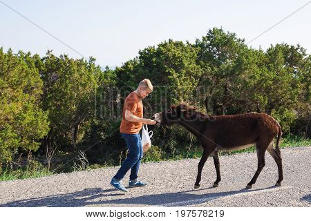 Young man playing and feed wild donkey, Cyprus, Karpaz National Park Wild Donkey Protection Area