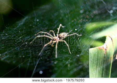 The big spider sitting on a cobweb.