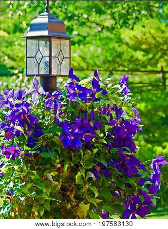A photo of a lamppost nearly covered in a bright purple clematis vine
