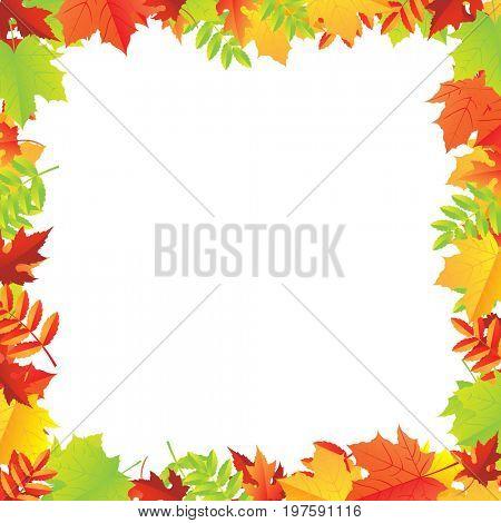 Colorful Autumn Leafs Frame