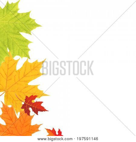 Color Leaves Border