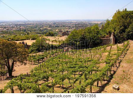 Italian vineyard in countryside of Tivoli, near Rome