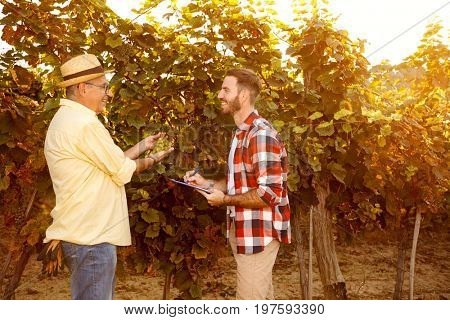 smiling vintner inspecting vine in vineyard, research vine concept
