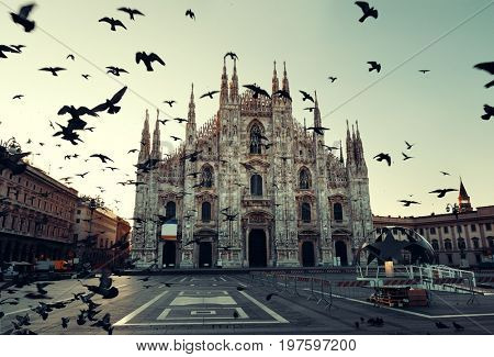 Pigeon at Cathedral Square or Piazza del Duomo in Italian, the center of Milan city in Italy.