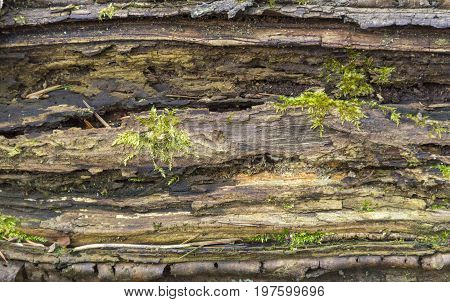 picture of a full frame rotting mossy wood detail