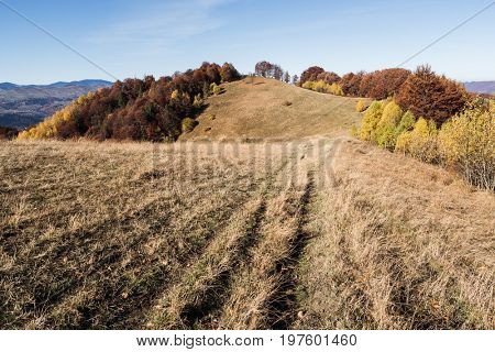 Road in a mountain meadow. Autumn landscape with deciduous forest and clear sky. Carpathians, Ukraine, Europe