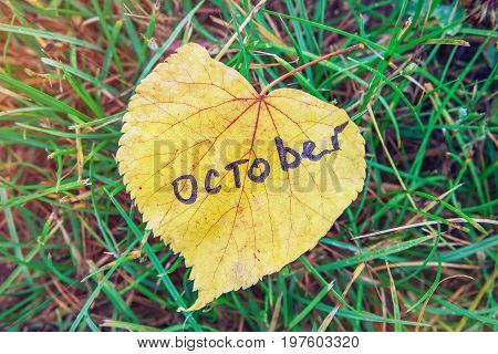 Yellow leaf with inscription OCTOBER. yellow leaf against background of green grass. symbol of October is autumn. Abstraction of autumn october